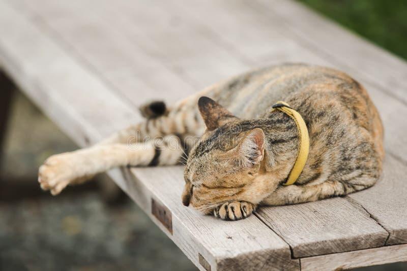 说谎在一把老木椅子的布朗猫 免版税图库摄影