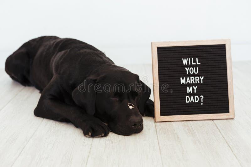 说谎在与一个除草的圆环的地板上的黑拉布拉多狗在他的与消息的鼻子和葡萄酒信件板:您与我的爸爸结婚 库存图片