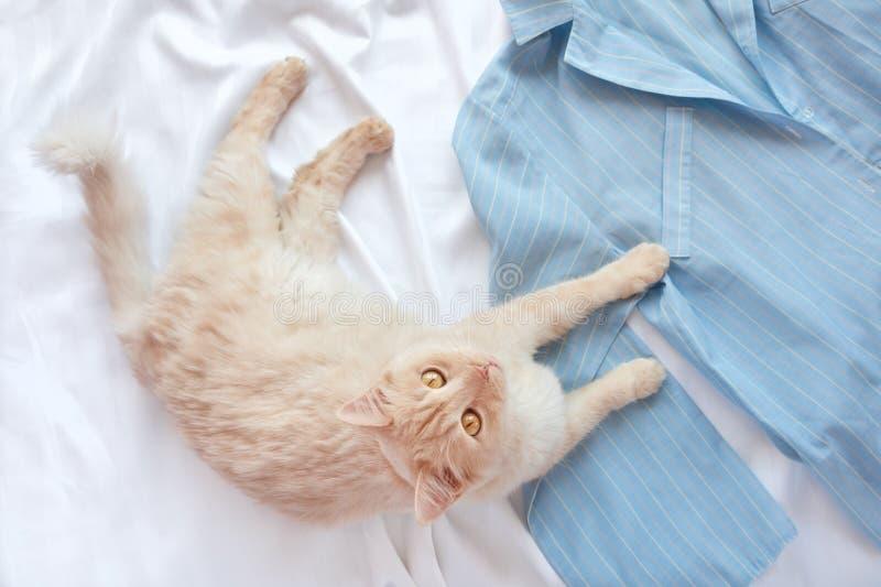 说谎在与睡衣的床上的红色蓬松猫 与妇女的平的位置穿衣,拷贝空间 免版税库存图片