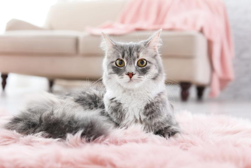 说谎在地板上的逗人喜爱的猫 免版税图库摄影