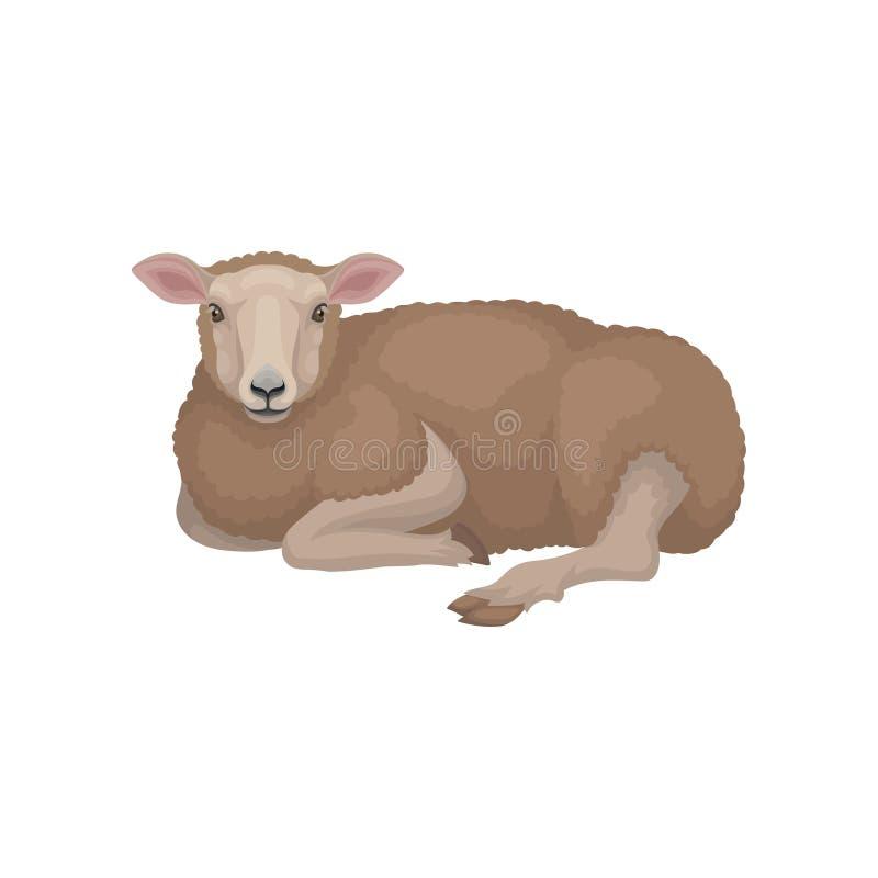 说谎在地面上的逗人喜爱的幼小绵羊 与棕色羊毛制外套的家畜 畜牧业 平的传染媒介设计 皇族释放例证