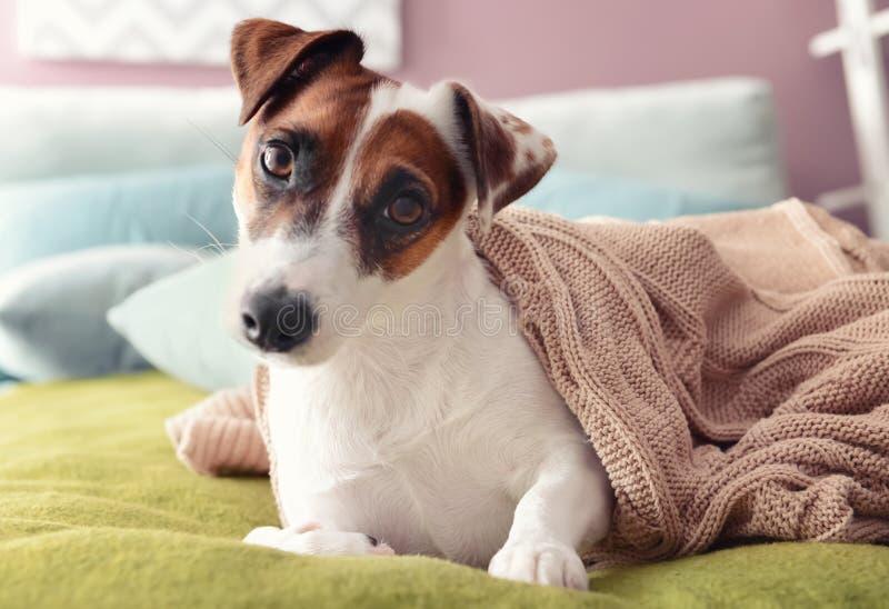 说谎在床上的软的格子花呢披肩下的逗人喜爱的滑稽的狗 免版税图库摄影