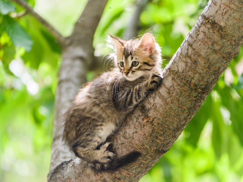 说谎在树的逗人喜爱的好奇小猫猫 免版税库存图片
