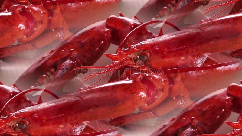 说谎在桌上的红色煮沸的小龙虾 免版税库存照片