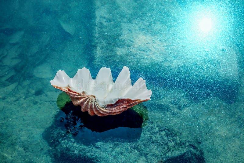 说谎在海滩的美好的壳 背景峡湾光芒海运星期日 免版税库存照片