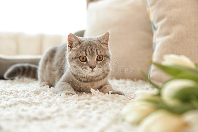 说谎在白色地毯的逗人喜爱的猫在郁金香附近 免版税库存图片