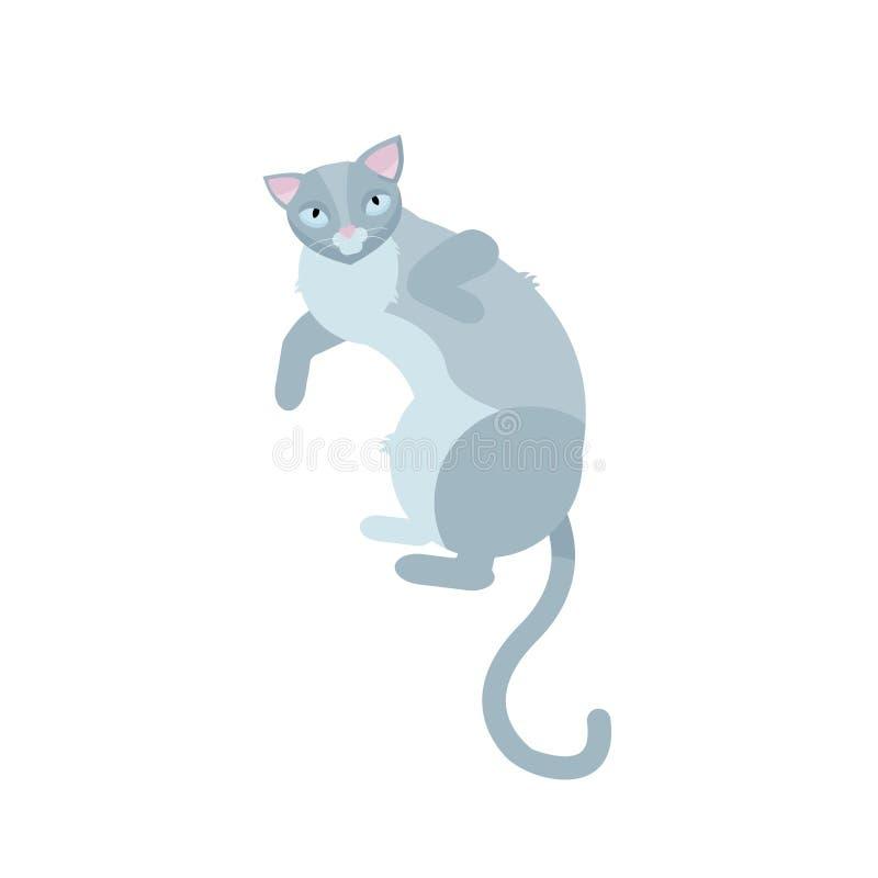 说谎在白色backgound的唯一灰色猫 俏丽的乐趣戏剧似猫的坐的哺乳动物家养的全部赌注 r 向量例证