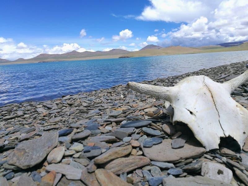说谎在石头和观看的湖 库存照片