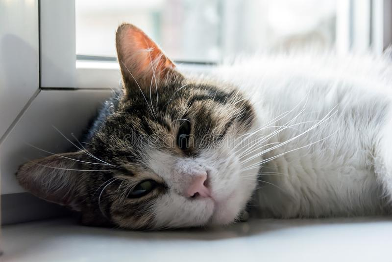 说谎在窗台的猫 免版税库存照片