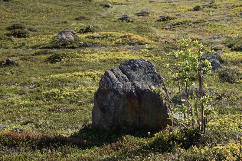 说谎在绿色春天草的一个小组石头在摩尔曼斯克在一个清楚,晴天 免版税库存照片