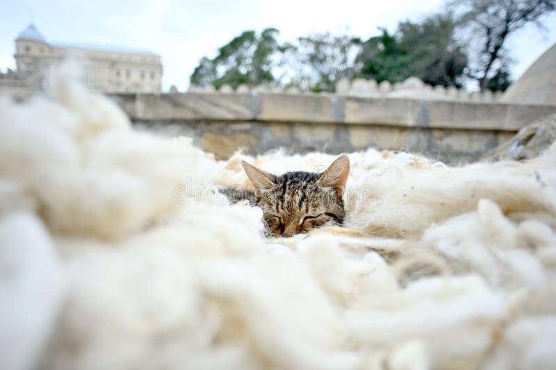 说谎在羊毛的猫 库存图片