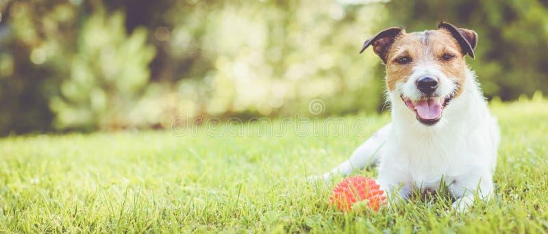 说谎在草的爱犬在晴朗的夏日全景庄稼 免版税图库摄影