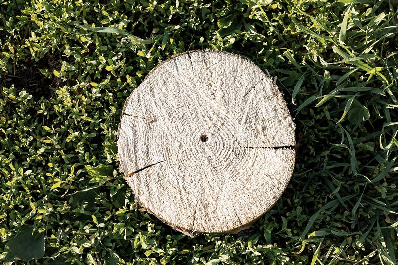 ?? 说谎在草的被锯的日志 清洗公园从老,病的树 免版税库存照片