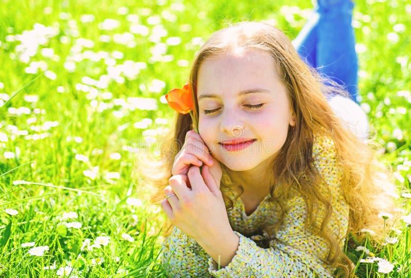 说谎在草,在背景的grassplot的女孩 梦想的面孔的女孩拿着红色郁金香花,享受芳香 孩子享用 图库摄影