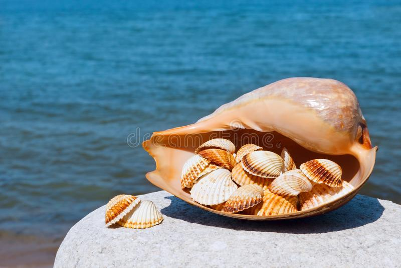 说谎在蓝色海背景的白色石头的异乎寻常的壳  库存图片