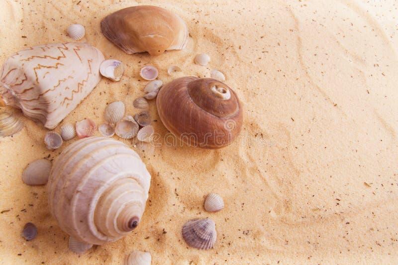 说谎在金黄沙子的美丽的贝壳 免版税库存照片