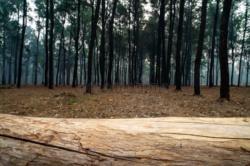 说谎水平地在地面上的树干特写镜头在松树森林1里 库存图片