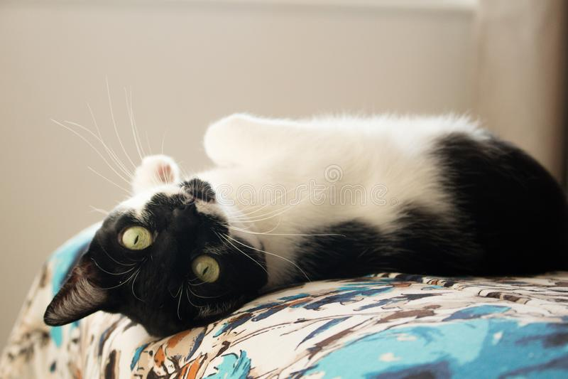 说谎的猫颠倒 免版税图库摄影