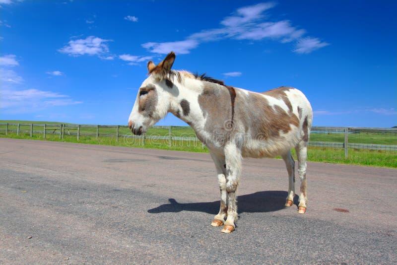 请求驮货驴子Custer国家公园 免版税图库摄影