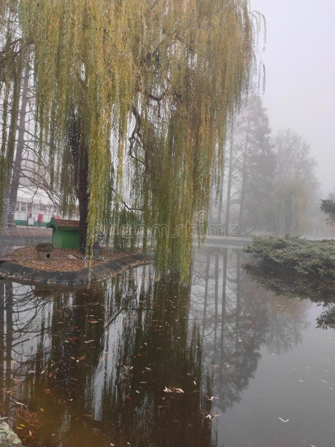 诺维萨德塞尔维亚市中心多瑙河公园冬季风景 库存图片