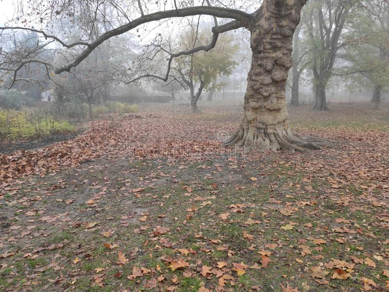 诺维萨德塞尔维亚市中心多瑙河公园冬季风景 免版税库存图片