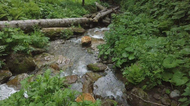 调低用在森林瀑布的水 库存照片