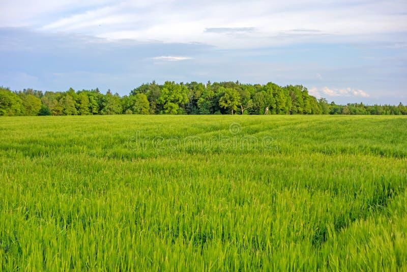 Download 调遣绿色麦子 库存照片. 图片 包括有 农村, 眼镜, 谷物, 玉米, 蓝色, 云彩, 横向, beauvoir - 72369006