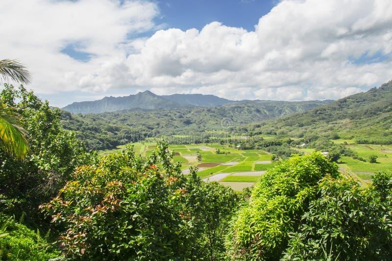 调遣hanalei夏威夷考艾岛芋头谷 免版税图库摄影