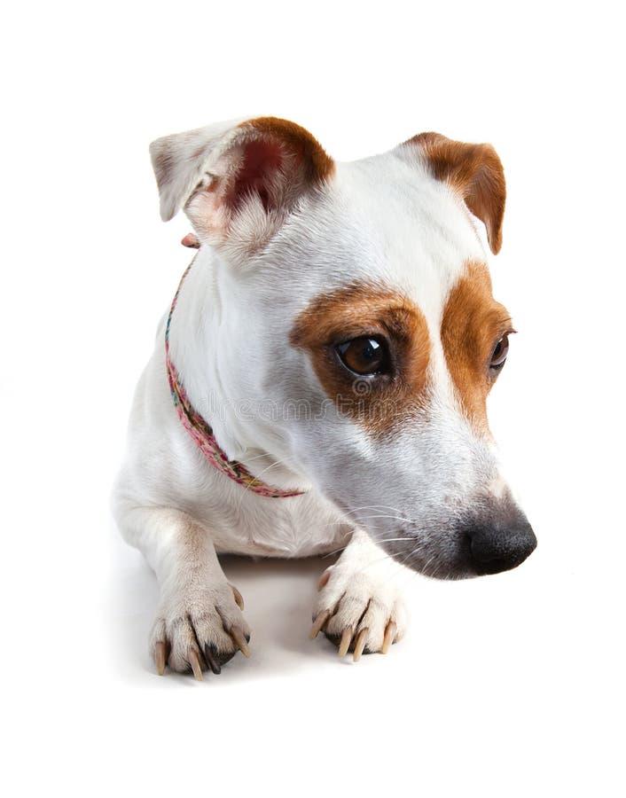 说谎和看往的狗 库存图片