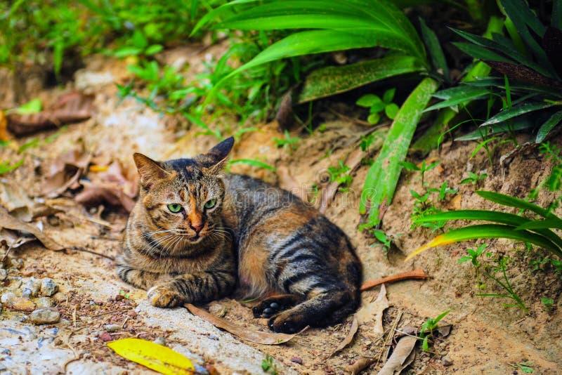 说谎在地面上的猫 免版税图库摄影