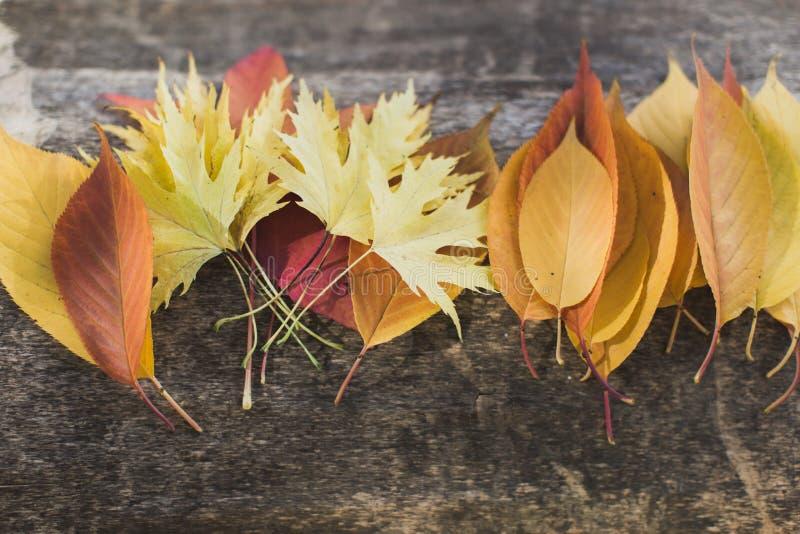 说谎在安排的树的明亮的叶子 免版税库存图片