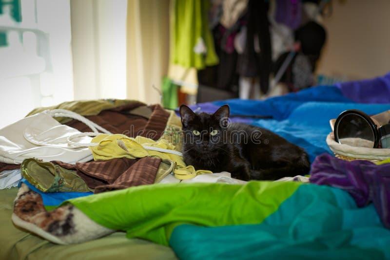 说谎在床上的猫 免版税库存照片