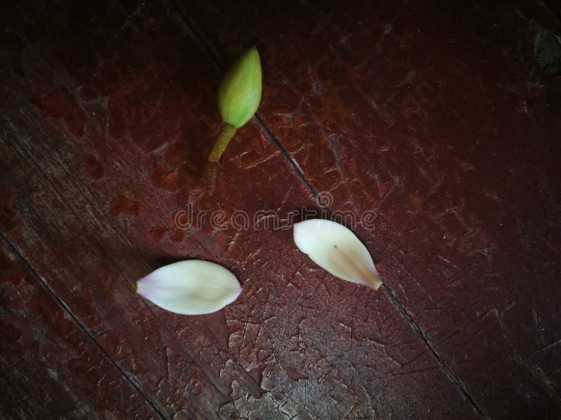 说谎在木桌上的木兰脚蹬和电灯泡 免版税库存图片