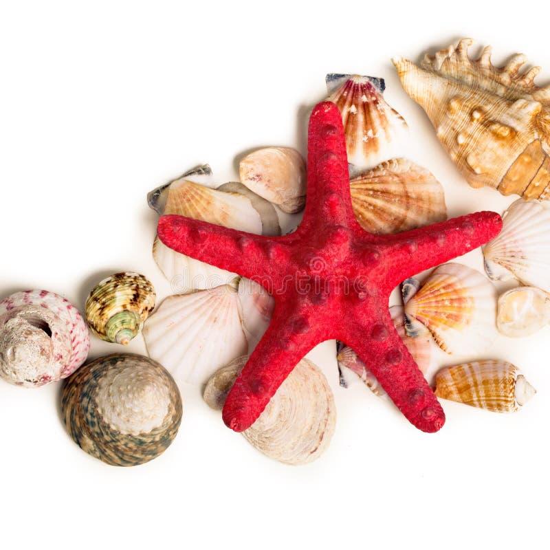 说谎在沙子的一个红色海星和贝壳 免版税库存图片