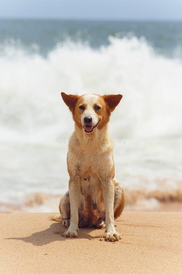 说谎在沙子的狗 免版税库存图片