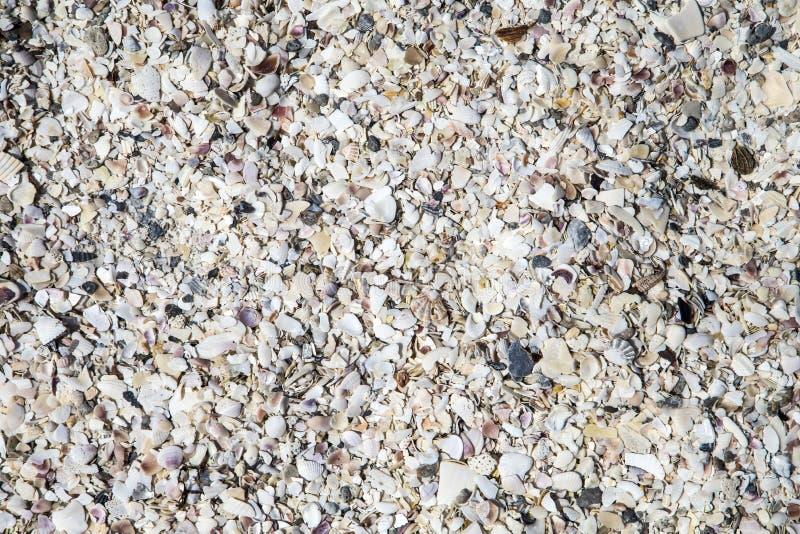 说谎在海滩的残破的壳 免版税库存图片