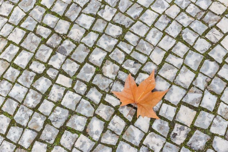 说谎在石路面的唯一秋天枫叶 图库摄影