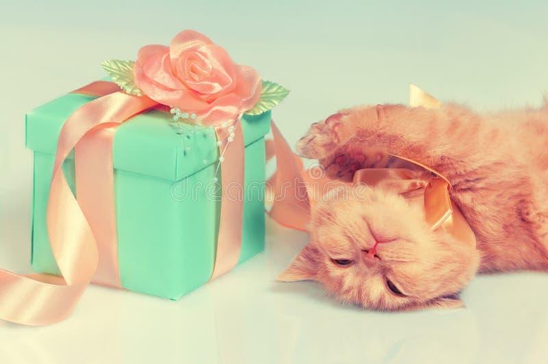 说谎在礼物盒附近的猫 免版税库存图片