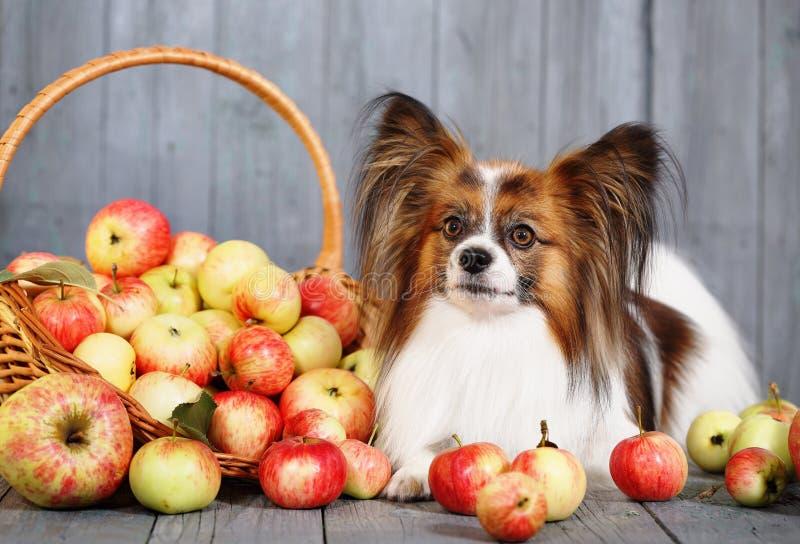 说谎在篮子附近的狗 免版税库存照片