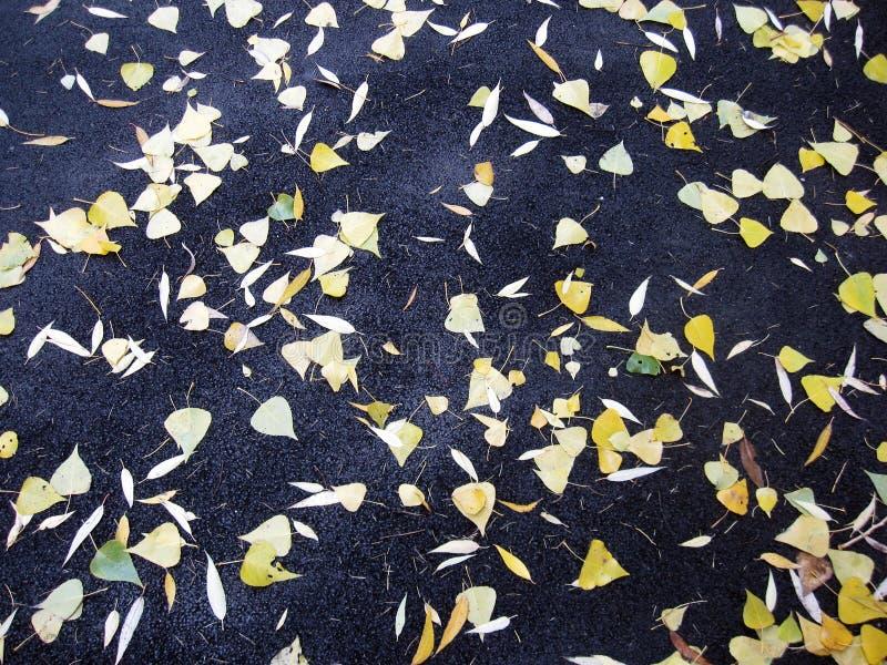 说谎在路面的下落的叶子 免版税库存照片