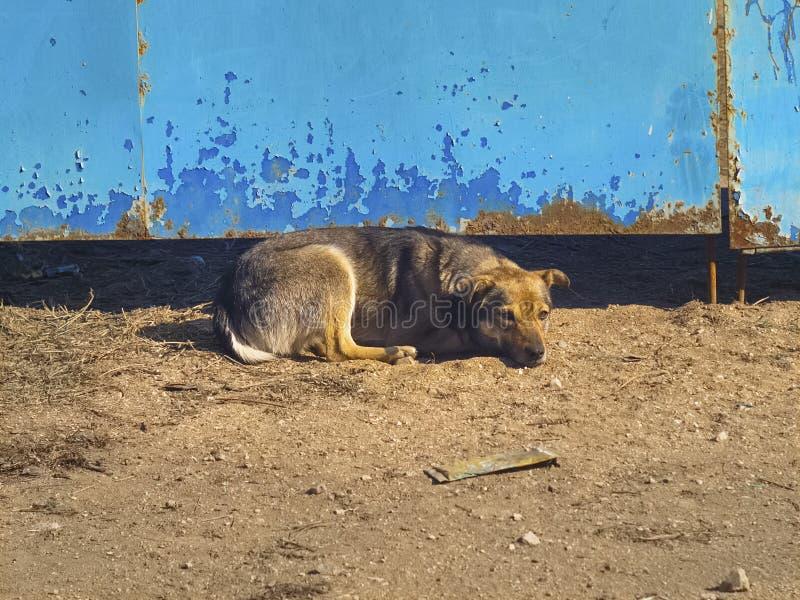 说谎在门的哀伤的孤独的狗 免版税库存照片
