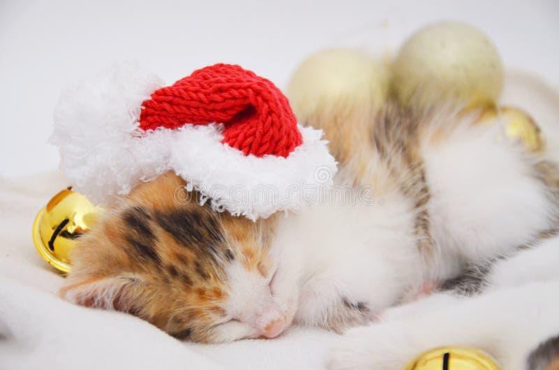 说谎的睡觉小猫 图库摄影