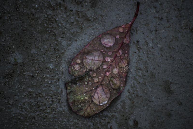 谦逊的叶子 免版税库存图片