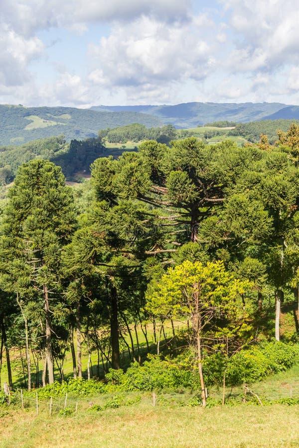 谷和山在新星Petropolis 库存图片