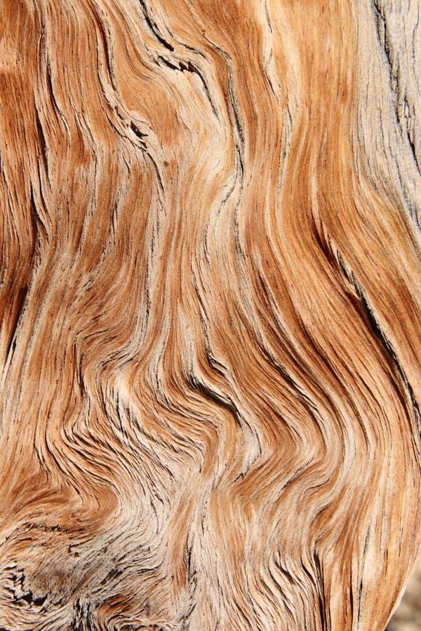 谷物扭转的木头 库存图片