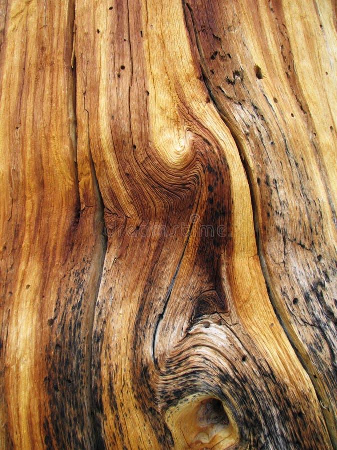 谷物扭转的木头 库存照片