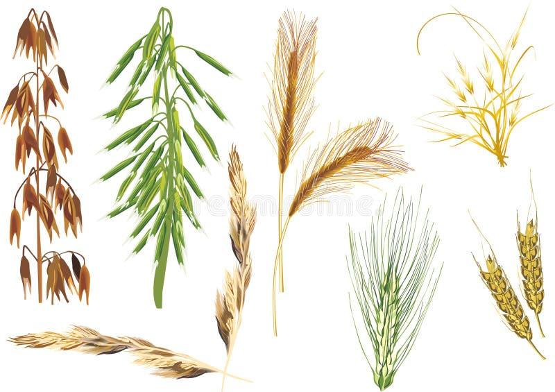 谷物收集颜色查出的白色 库存例证