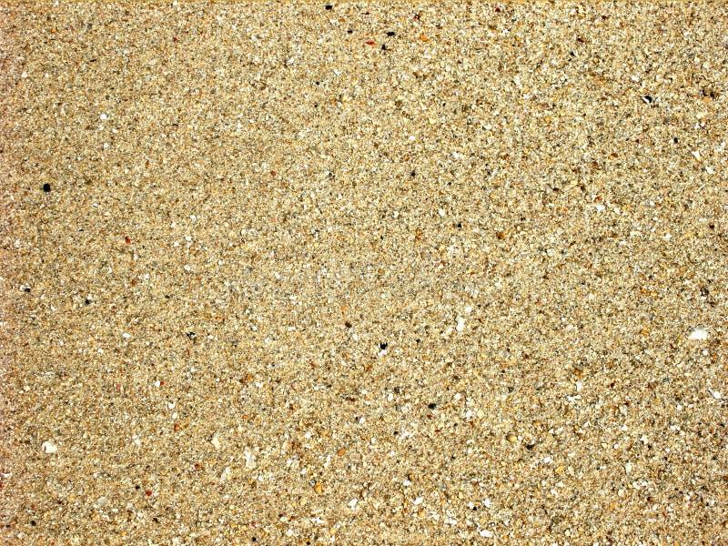 谷物沙子 向量例证