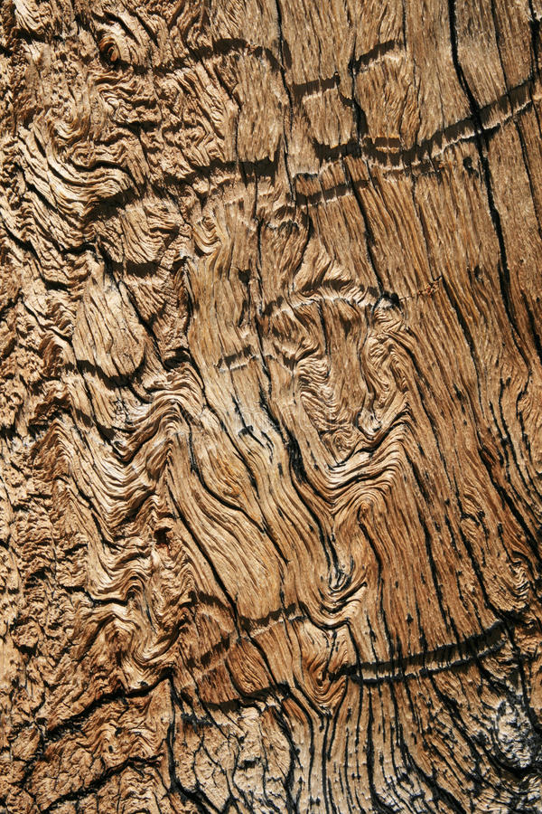 谷物波浪木头 库存照片