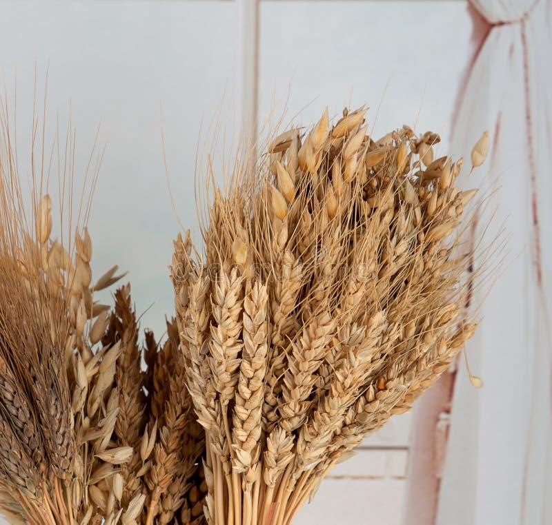 谷物的不同的类型的耳朵:麦子,燕麦,黑麦 库存图片